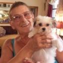 SOLD, Trudy Star, female Maltitzu to Kathy Swain in Mexico Beach, FL